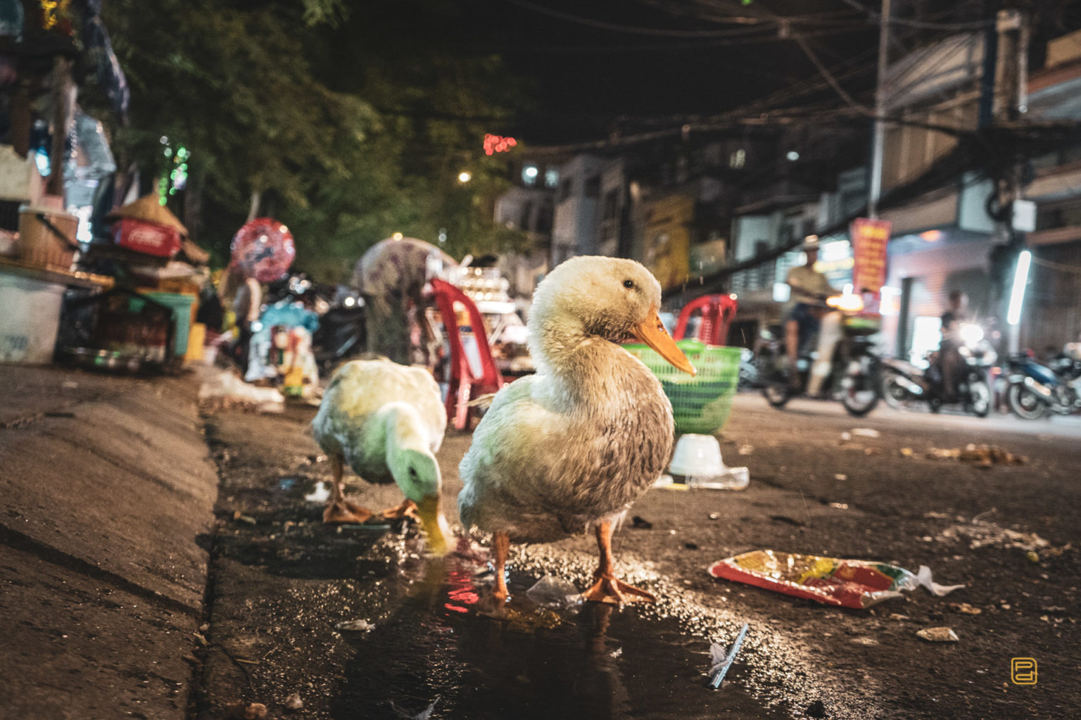 Duck the street, Saigon, Vietnam